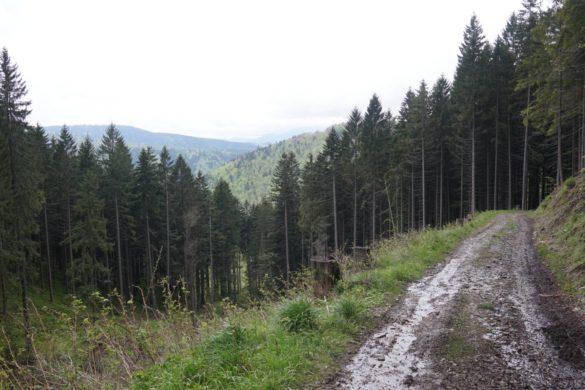 Denk ich an Europa in der Nacht… von europäischen Wäldern und Wahlen